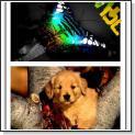 دانلود مجموعه ۲۳ پس زمینه زیبا برای موبایل با موضوع حیوانات در ابعاد ۴۸۰*۳۲۰